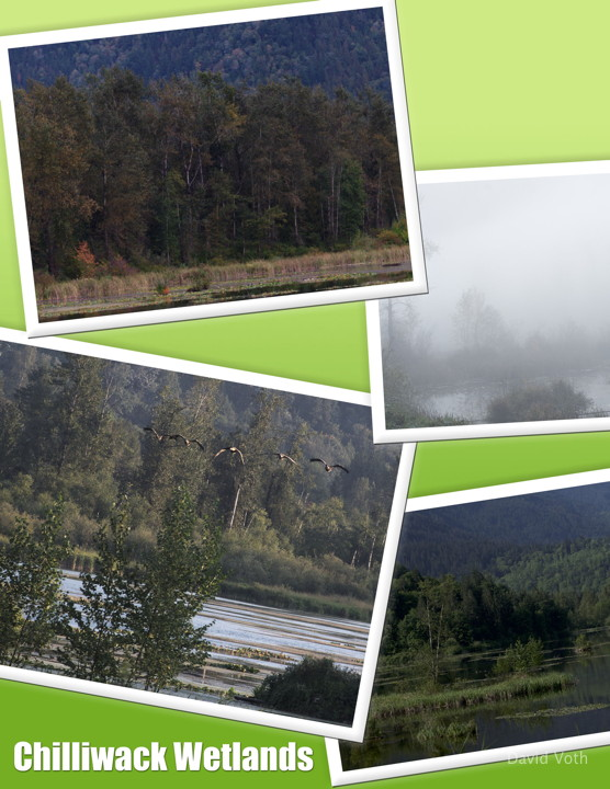 Photo collage of images from Chilliwack Wetlands